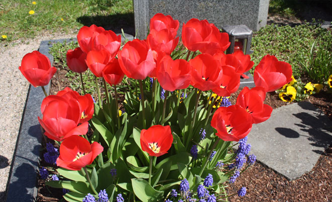 Grabbepflanzung und -pflege