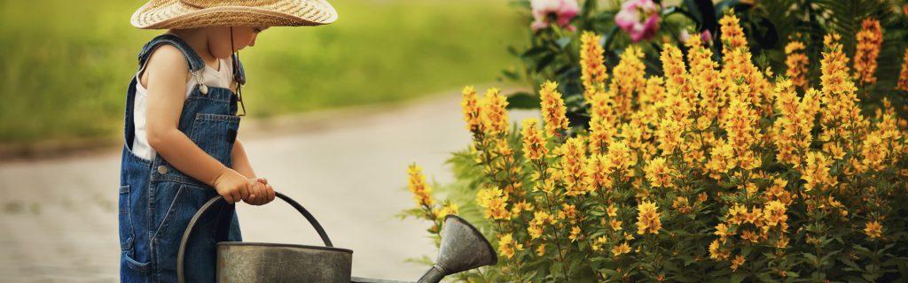 Gartenbau Kathöfer, Solingen: Gartenbau und Gartenpflege