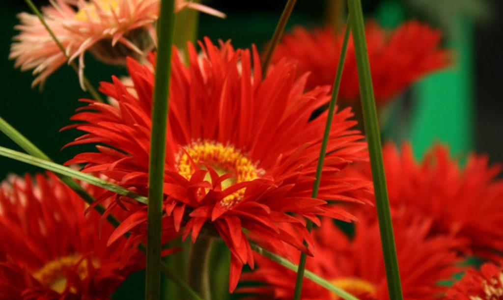 Gesunde Pflanzen bereichern den Garten