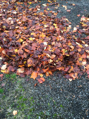Herbstlaub auf Straßen und Wegen muss entfernt werden