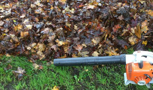 Laub muss im Herbst beseitigt werden