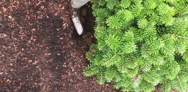 Piniendekor – der Ersatz für Bodendecker
