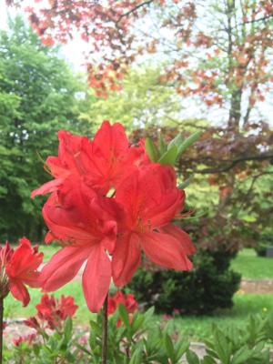 Ein gepflegter Garten ist die Visitenkarte Ihres Grundstücks