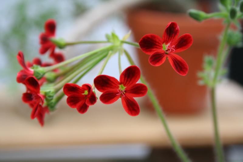 Details im Garten wahrnehmen und sich daran erfreuen - ein Zeichen von Erholung