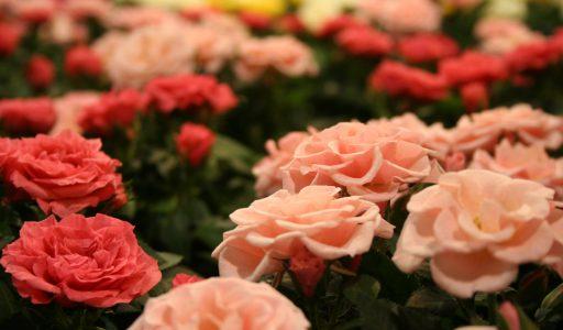 Der Garten als Rückzugsort bei Stress und Sorgen