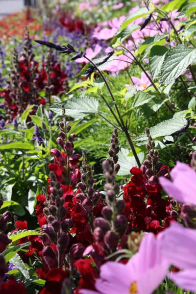 Eine Wildblumenwiese mit blühenden Pflanzen bietet für Wildbienen ein umfangreiches Angebot
