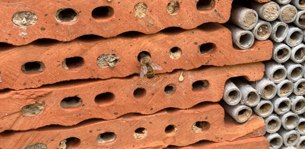 Wildbienen im Garten fördern